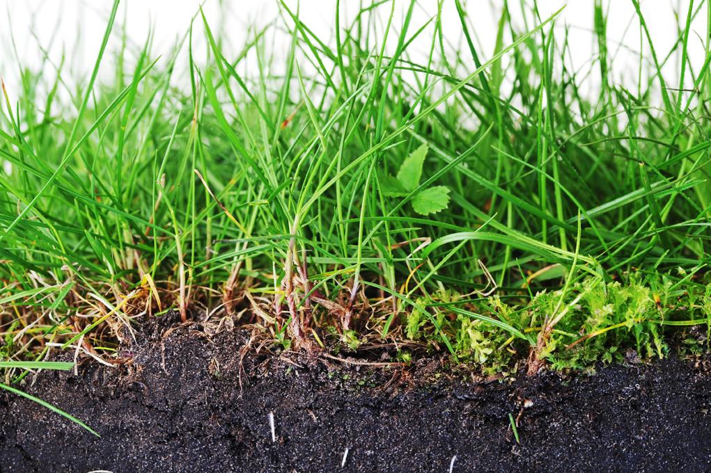 Best Lawn Fertilizer >> EWSWA | Essex Windsor Solid Waste Authority